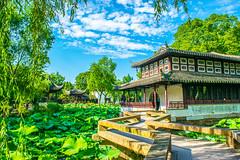 (wpc302) Tags:  suzhou china sky pond  lily lotus