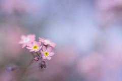 Generate (Michael A64) Tags: blume blumen flower flowers