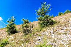IMG_6659 (rickyrebora) Tags: col basset sauze doulx sestriere summer mountain montagna prati