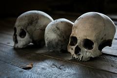 Head (VioletHippie) Tags: malaysia borneo banting iban headhunter d750 fullframe nikon photo color teste scheletri head skull tab donttuch believe credere spiriti