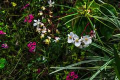 MULTICOLORI NELLA FORESTA (Ezio Donati) Tags: natura nature fiori flowers nikond810 africa cameroun areayaounde colori foresta forest