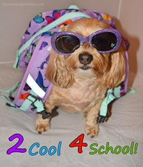 2 Cool 4 School! (yourdesignerdog) Tags: ifttt wordpress all posts wordless wednesday back school backpack blog cute designer dogs dog sunglasses pets photography sadie too cool for