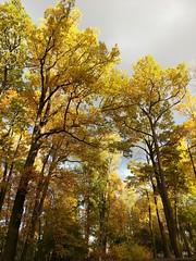 .    . Pushkin . (presteza777) Tags:   stpeterburg russia tsarskoyeselo pushkin autumn automne   gold