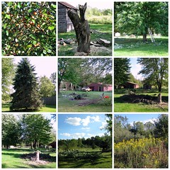 Memories of a Perfect September Day (genesee_metcalfs) Tags: collage september summer outdoors michigan barn shed backyard trees nature maple crabapples pine field goldenrod