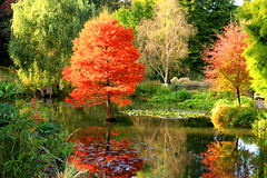 Autumn Reflections (acwills2014) Tags: autumn fall colour color reds red sunlight gardens reflections water hilliergardens sirharoldhillier arboretum lilies lakereflection lake autumnal stunning