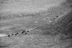 DSC_0246 (Kaigara Online) Tags: enisala cetate capul dolosman bw clouds water reflections trees fields romania tulcea jurilovca birds cows sheep cross cinema gods ruins arganum citadel medieval