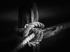 (rickhanger) Tags: rope fence fenceline fencepost bw blackwhite knot