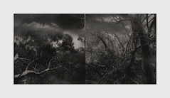 give it enough (Kenneth Rowe) Tags: bw blackandwhitelandscape blackandwhite monochrome monochromia diptych mixediphoneography iphone6 tankhill trees woods forest