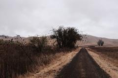 Ravens & Blackbirds at the Dry Lake (What Photos Look Like) Tags: 2016 35mm 35mmequiv 32 bayarea bjorke botzillacom california fujifilm fuji fujix fujix100t fujifilmx100t kevinbjorke normalprogram photorant sf sanfrancisco standard wideangle x100t sonoma usa