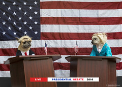 Halloween 2016 (jagsayago) Tags: halloween 2016 presidentialdebate debate election usa franchise frenchbulldogs elecciones dabate politic politica pp dogs perros