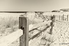More from the Shore (Al Perrette) Tags: alperrette island beach state park