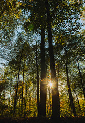 before you (nardell) Tags: trees nature fall autumn fall2016 sunset flare sunflare sunbeams naturewalk naturephotography landscape mtgretna pennsylvania pa golden goldenhour foliage fallcolors leaves