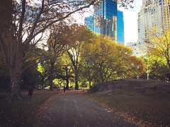 Autumn in #newyork. #trees #iloveny #cityscape  (deirdrelovestrees) Tags: instagramapp square squareformat iphoneography uploaded:by=instagram rise