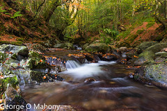 Crough Woods 3 (George O Mahony) Tags: countywaterford ireland ie woods autumn water trees colour longexposure