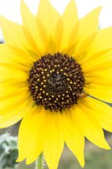 IMG_9423a (markbyzewski) Tags: flower colorado gardenofthegods ugly coloradosprings