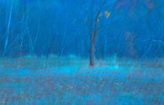 edwinloyolaNewYorkPortfolioReviewFall03 (Edwin Loyola) Tags: autumn winter summer abstract fall nature seasons fineart fourseasons icm esl intentionalcameramovement edwinsloyola edwinloyola edwinloyolaphotography eslphotography