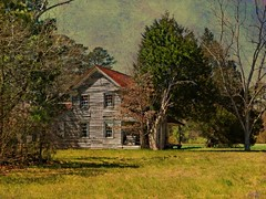 Old Bertie County Farm House in Winter Sun: Near Askewville, Bertie County, North Carolina (EdgecombePlanter) Tags: painterly abandoned farmhouse nc sad decay south northcarolina southern carolina derelict forlorn deterioration likeapainting