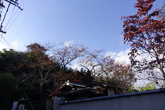 (ddsnet) Tags: travel plant japan sony cybershot autumnleaves  nippon   autumnal nihon  backpackers      rx10 kyotofu