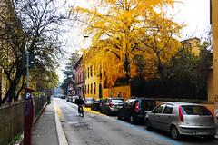 Bolonia 2 (-Luisfer-) Tags: color rojo italia foto sony amarillo universidad bologna bolonia luisfer luisferfoto