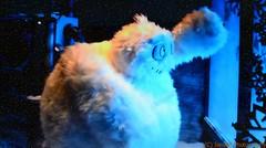 EEUU - 128 (Ismael I) Tags: christmas decorations newyork color navidad noche fiestas tienda figuras muecos comercio nuevayork escaparate decoracion guirnaldas fiestasnavideas