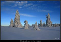 Neige au Champ du Feu (HimalAnda) Tags: mountain snow france montagne alsace neige vosges sapin eos400d canoneos400d stéphanebon