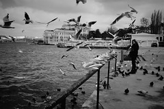 (Alexander Oleynik) Tags: sea bw woman black birds bay spring mooring