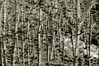 NIK_7744 (nikdanna) Tags: trees blackandwhite nature alberi woods pentax natura bianconero bosco interno7 nikdanna