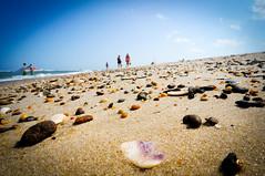 Sea Shell Shore (NotSoNegative.com) Tags: ocean summer vacation people seascape hot beach nature water seashells walking de landscape sand natural peaceful wave bluesky calm atlantic shore enjoy deleware rehoboth wander collecting browse searocks
