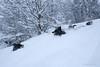 Hard in the snow (FrøydisPhots) Tags: dog pet snow playing norway norge hund bordercollie sørtrøndelag snø hunder kjæledyr leker winther vintner romjul berkåk myesnø