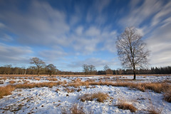 Winter in National Park de Hoge Veluwe (Elroy Spelbos) Tags: winter snow nature netherlands clouds landscape movement sneeuw natuur wolken veluwe heide landschap heathland beweging nationalparkdehogeveluwe