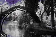 (Ousia Dark) Tags: madrid blackandwhite bw espaa blancoynegro blackwhite spain nikon purple morado parquedelcapricho nikond40