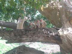 A Monkey Family on a Branch