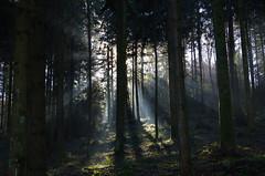 Sonnenstrahlen (Aah-Yeah) Tags: sunlight mist tree fog forest nebel wald sonnenstrahlen sunbeams