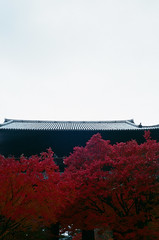 Maple leaves in Kyoto [Explored] Feb 27, 2015 (BERT DESIGN) Tags: