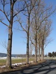 Back to Bürden (Gerlinde Hofmann) Tags: germany thuringia village snow brünn baretree row curvy road alley bluesky winter