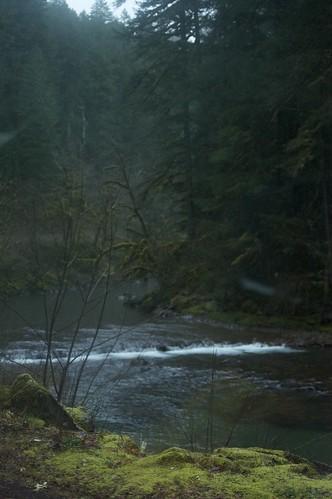 More moss, more river