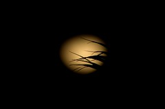 Moon light silhouettes (amrocha) Tags: brazil moon black halloween southamerica leaves silhouette brasil pentax south moonlight minimalism manualfocus minimalist sul darksky amricadosul 2015 southhemisphere legacylenses pentaxart smcpentaxm80200mmf45 pentaxflickraward pentaxk5ii alexandremrocha