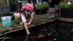 DSCF2270 (ronaldzijlstra2) Tags: kid son boy dog cairnterrier koi vis vish vijver pond