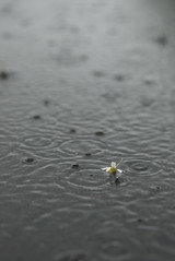I like people who smile when it's raining. (esmeecadoni) Tags: light holland reflection nature water netherlands rain photography droplets spring europe bokeh outdoor sony minimal simplicity simple minimalistic drenthe littlethings beautifulearth