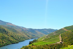 down the valley (ekelly80) Tags: portugal june2016 summer vilanovadefozca guarda casadorio quintadovallado wine winecountry dourovalley douroriver beautiful scenery valley mountains hills water river above vineyards green light morning hike