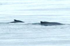 2016-07-22 S9 JB 102656#cvgaac (cosplay shooter) Tags: humpback humbackwhale buckelwal wal norwegen norway polarkreis nordpolarkreis nordkap northcape arcticcircle x201608 100a norge