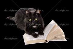 Black cat reading a book on black background (supernoviy) Tags: cute isolated young black green background yellow expression eye open portrait hair science concept sheet intelligent dark look read book education learn library clever reading curiosity animal pets cat kitten feline domestic page mammal fur watching wisdom kitty paw staring whisker claws wise literature educated attention knowledge textbook intellect greeneyed