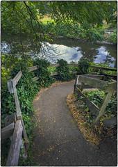 Down to the River (NoJuan) Tags: nikkor nikkorlens a7 sonya7 sonya7withmanualfocuslens 20mmnikkor nonai path trail walkway river sammamishriver