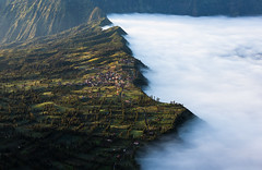 Meadow & Fog (wu di 3) Tags: indonesia southeastasia morning fog volcano bromo edge meadow
