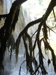 Algas en ramas negras. (margabel2010) Tags: cascadas cascada agua aguadulce ramas algas presa presas blanco blancoynegro blancoyazul solysombra sierra guadarrama airelibre madera contraluz contraluces