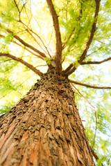 Wonderful Autumn (dodinatop) Tags: naturaleza otoo arboles parque autumn nature seasons wood geneva