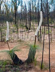 160925_Warrumbungles_5666.jpg (FranzVenhaus) Tags: trees creek countrybush plants cliffs australia mountains warrumbungles nsw water newsouthwales wilderness rocks aus