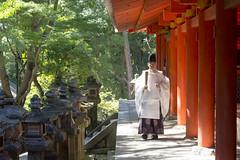 Shinto Priest (Patrick Vierthaler) Tags: nara kasuga grand shrine taisha shinto schrein park kansai japan red rot japanese japanisch            priest priester