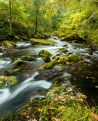 Time for a change. (289RAW) Tags: river leaves 289raw watersmeet nationaltrust devon autumn