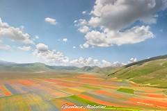 Flowering in Castelluccio (gianluca malatino) Tags: colori colormix mountain sky fioritura castelluccio rocks panorama landescape nature